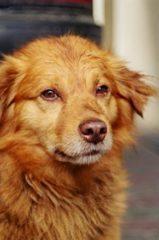 Gyakran elkóborol a kutyája? Kikötni vagy GPS-t rakni rá, ez a kérdés.
