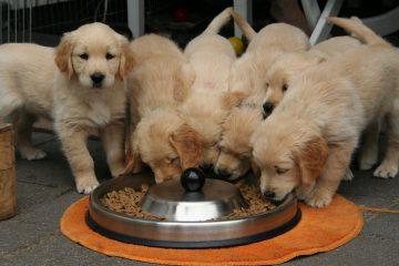 Kutyatápot online